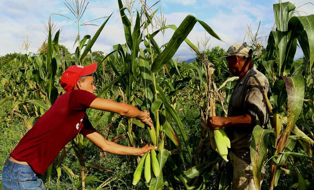 Economía de Honduras 15