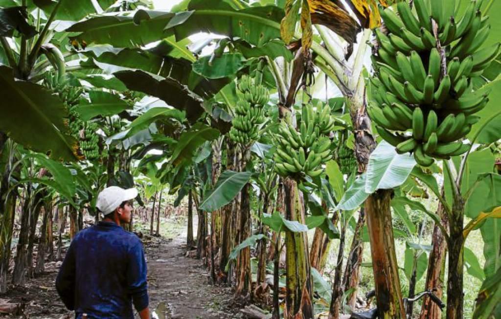 Economía de Honduras 6