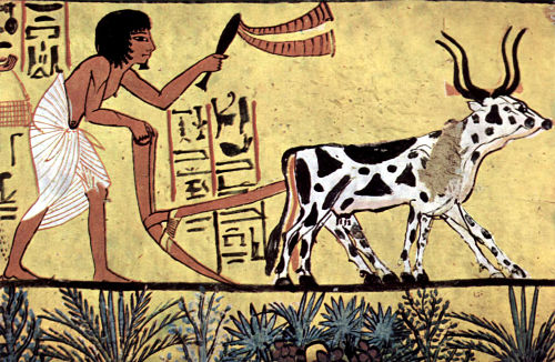 Economía de Mesopotamia 8