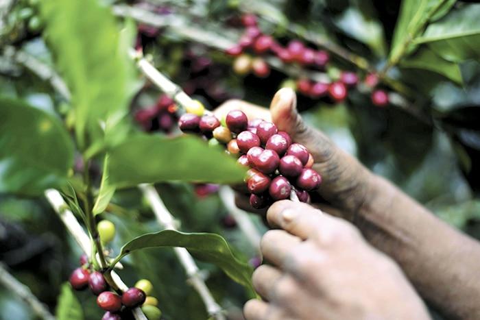 Economía de Nicaragua 8